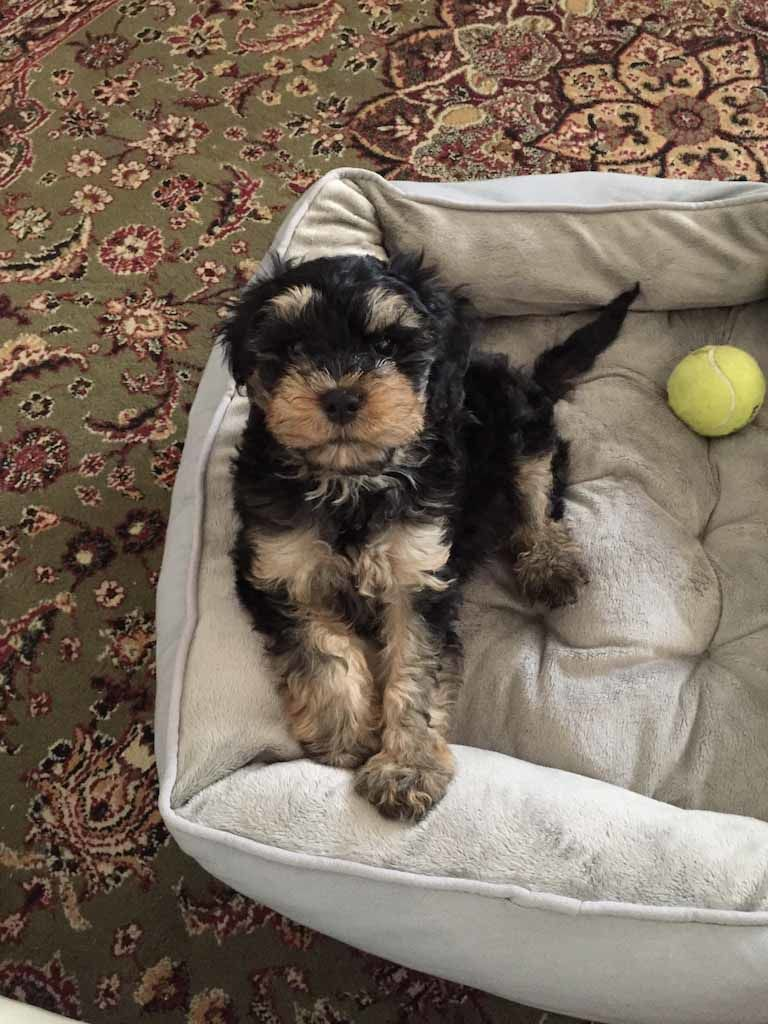 mount lawley pets and puppies