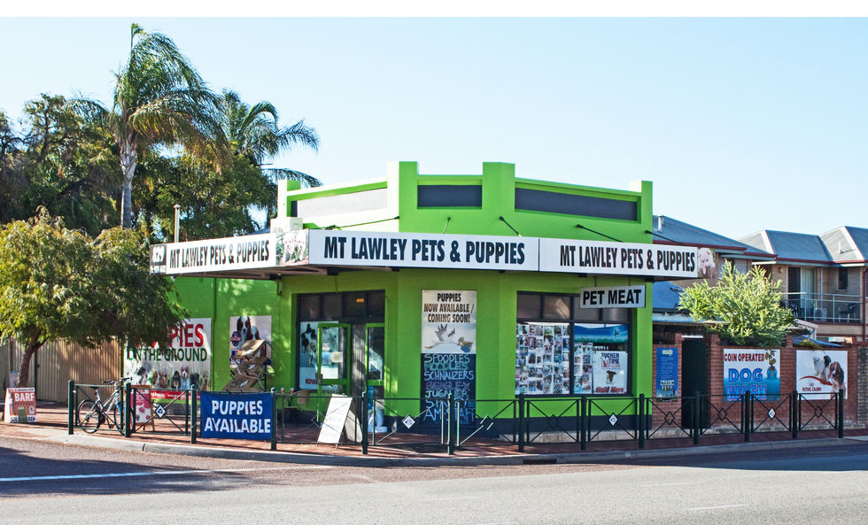 Community Mount Lawley Pets And Puppies